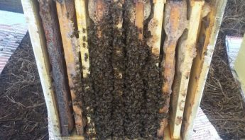Into the Snow- Beekeeping woes of winters coming