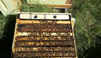 Feeding Your Honeybees: Syrup, Feeders, and What to Look For