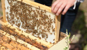 Quality Inspection for all Beekeepers