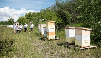 Register Your Beehive with Alberta