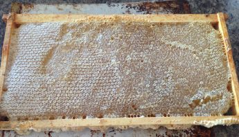 Dandelion Flow and Your Bees- #3 Honey Production