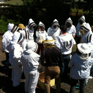 Beekeeping field day