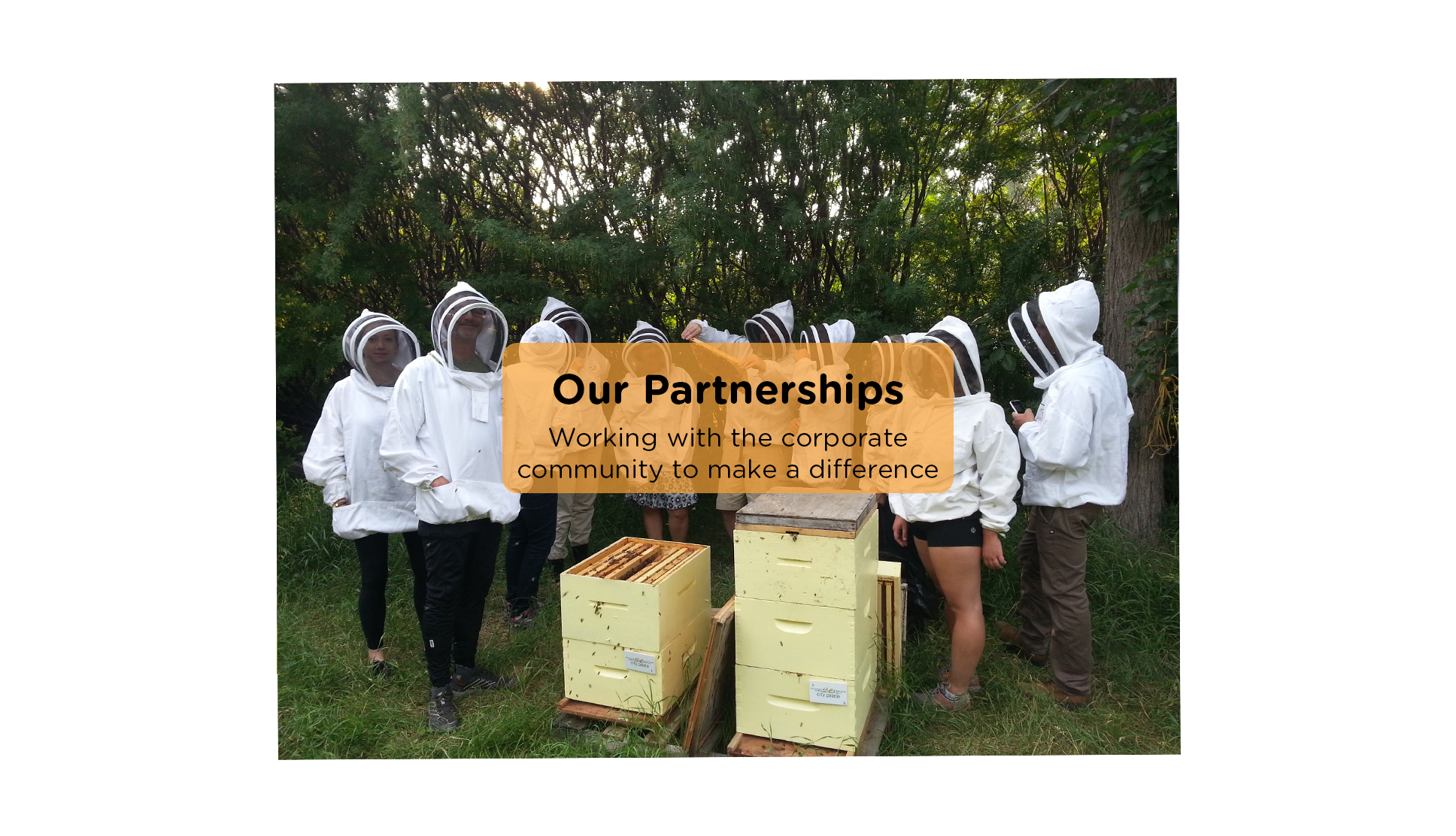 GetInvolved-Partnerships-ABCBees
