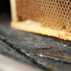Honey dripping from the comb