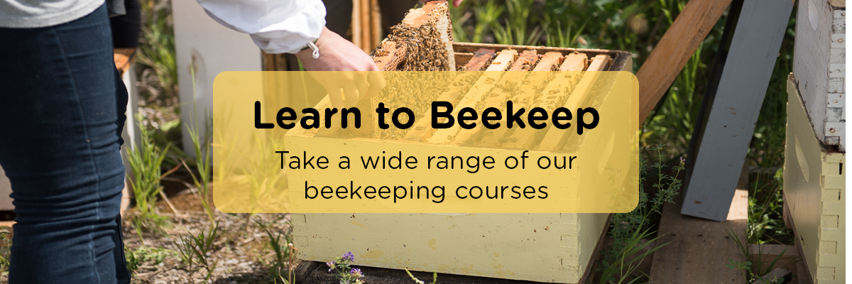 Learn-ABCBees