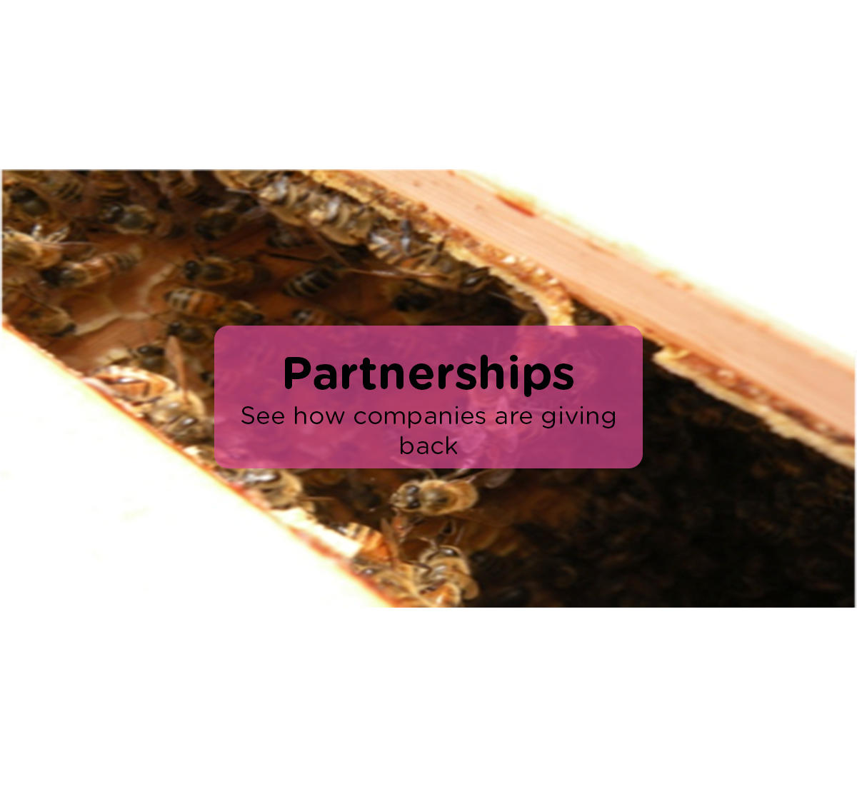 Partnerships-ABCBees