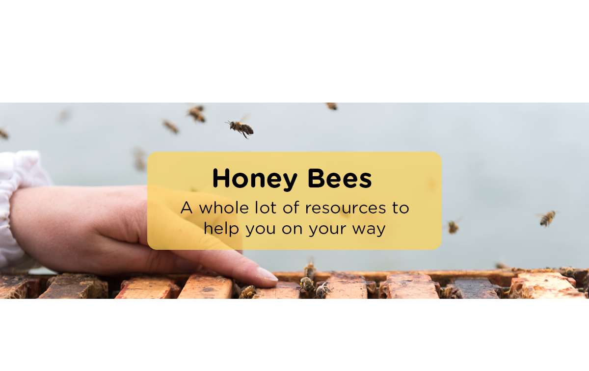 Learn-Honeybees