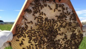 Exploring Innovation in Beekeeping – The Cathedral Hive