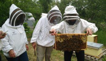 Field Days in 2017- ABC Bees, Fairmont Palliser, Heritage Park, Grow Calgary