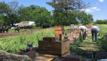 ABC Bees goes to Michael Bush Farm, Nebraska