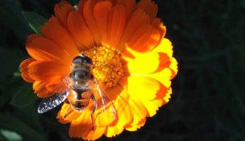 A Pollinators' City: Our Interview of Dr. Katherine Baldock