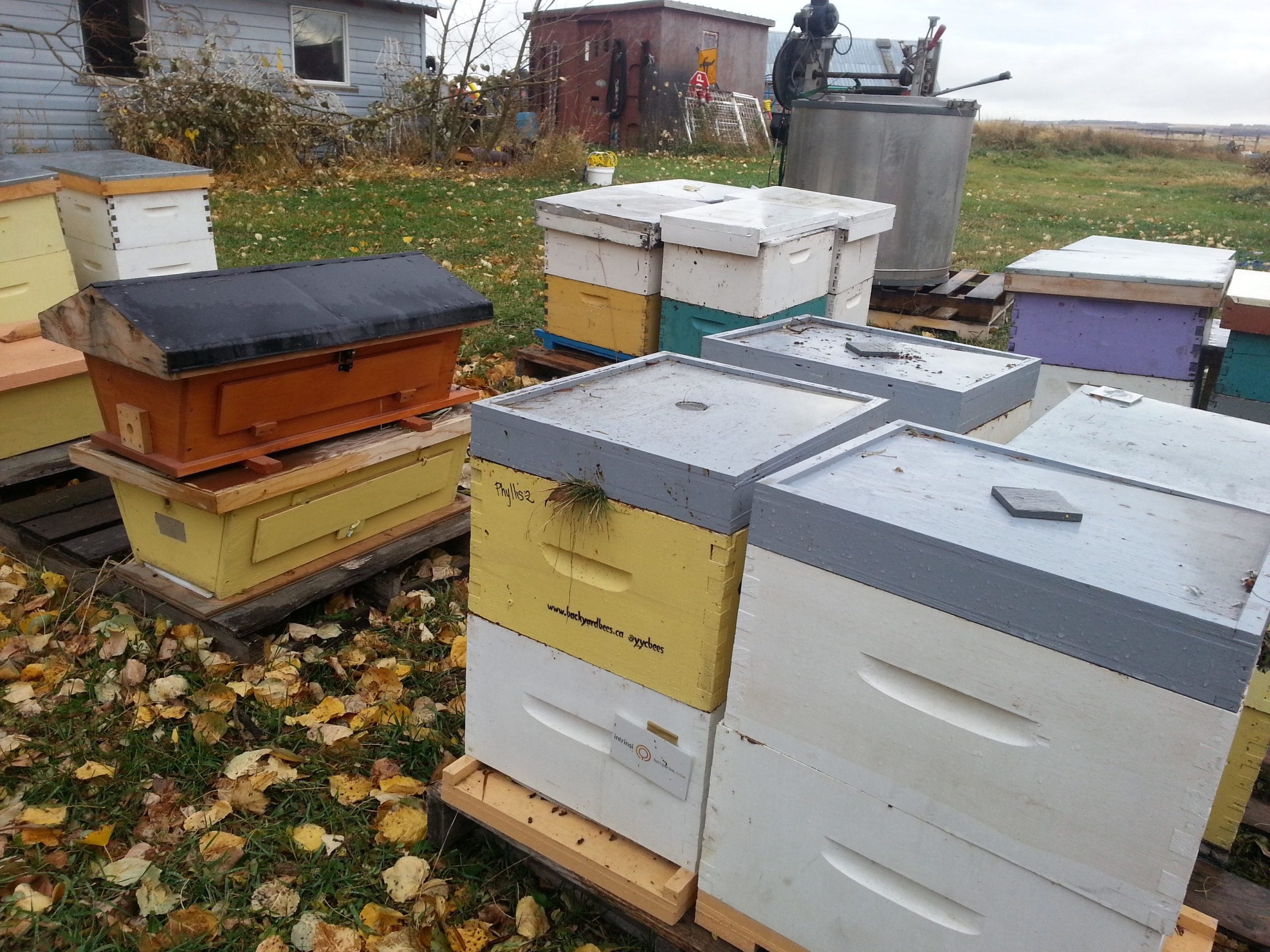 Compressed hives going into winter
