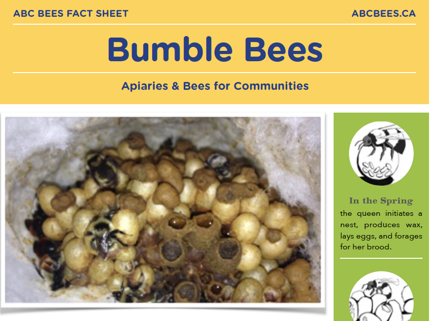BEE FACT SHEETS