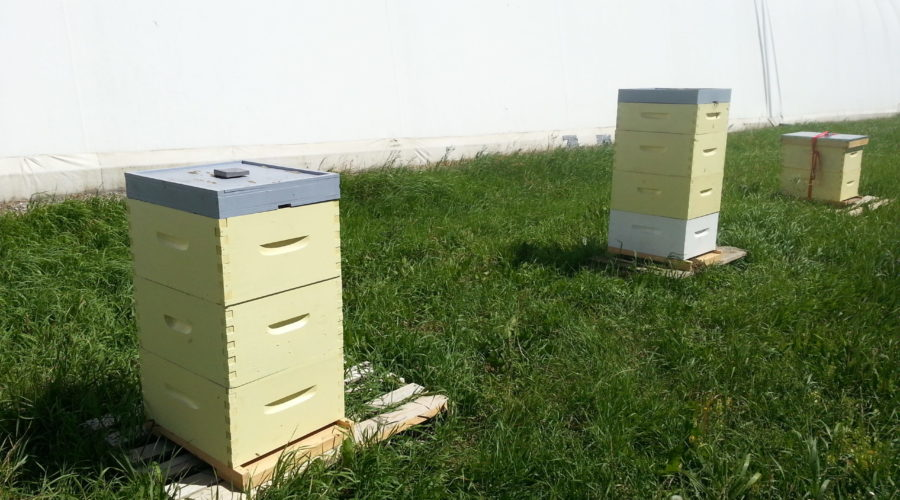 Room to drive a riding lawn mover between hives