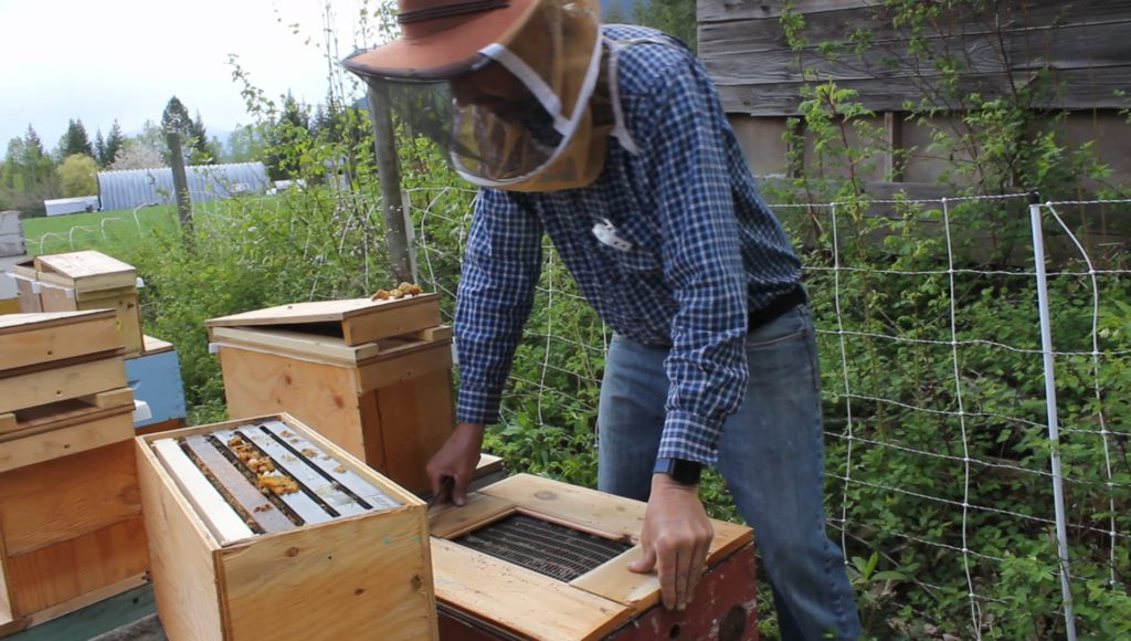 Bill Stagg adding a queen excluder to the parent hive before adding the nuc box