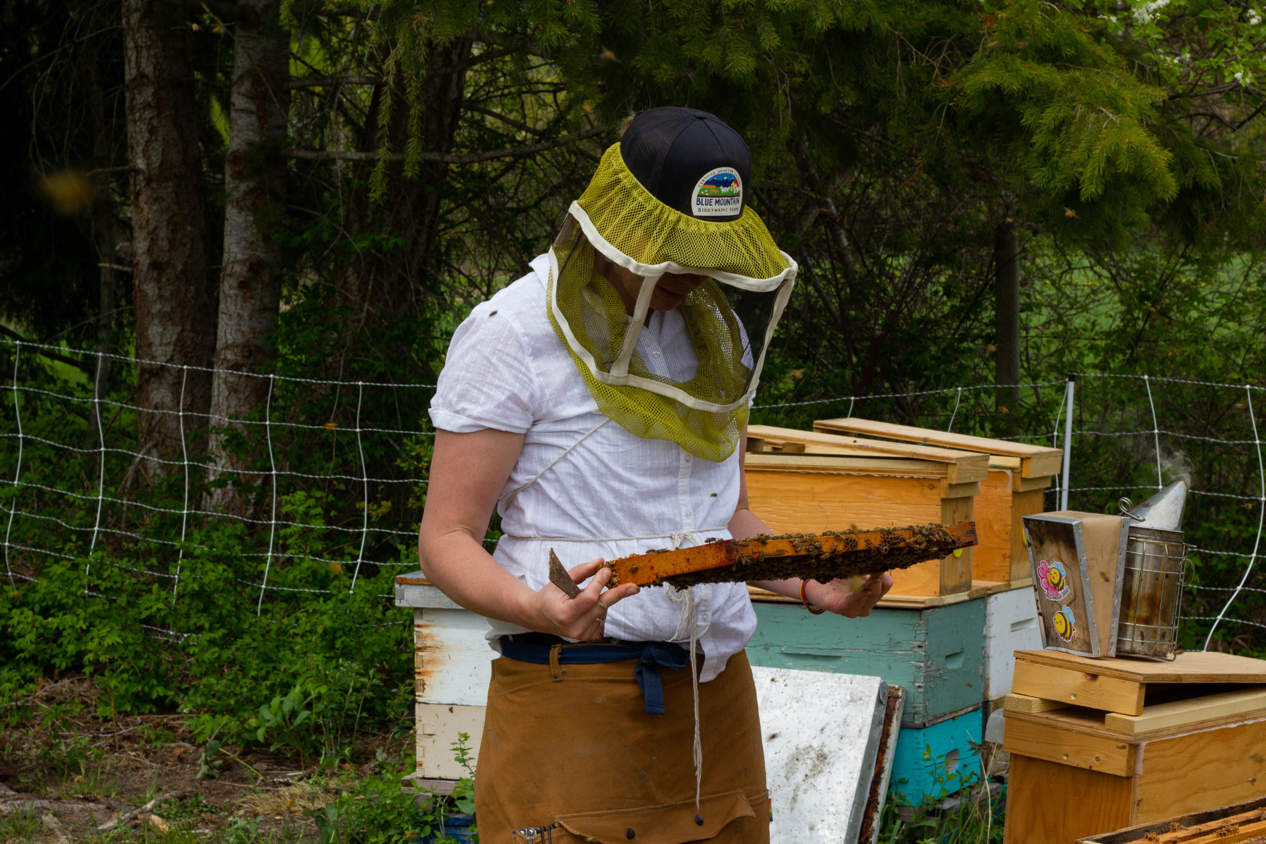 A photo of Eliese Watson checking for open brood, surrounded by beehives and trees.