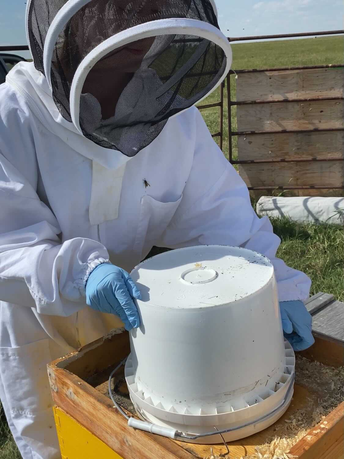 bucket feeder being placed on top of a hive