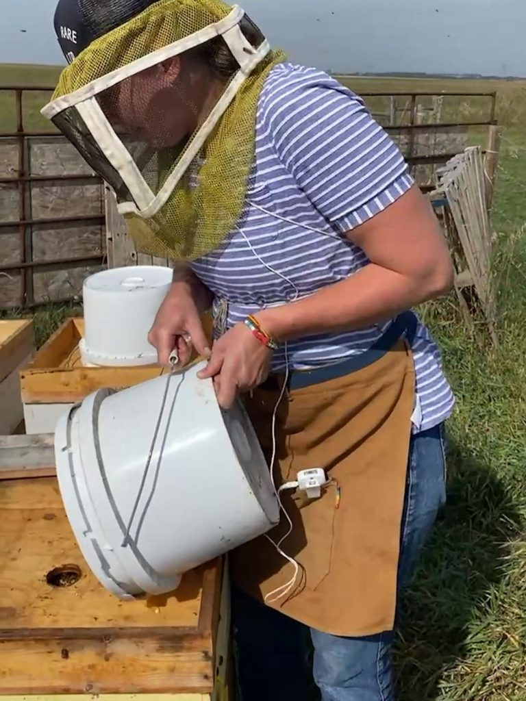Eliese placing the bucket of syrup onto the hive.
